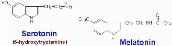 serotonin - melatonin